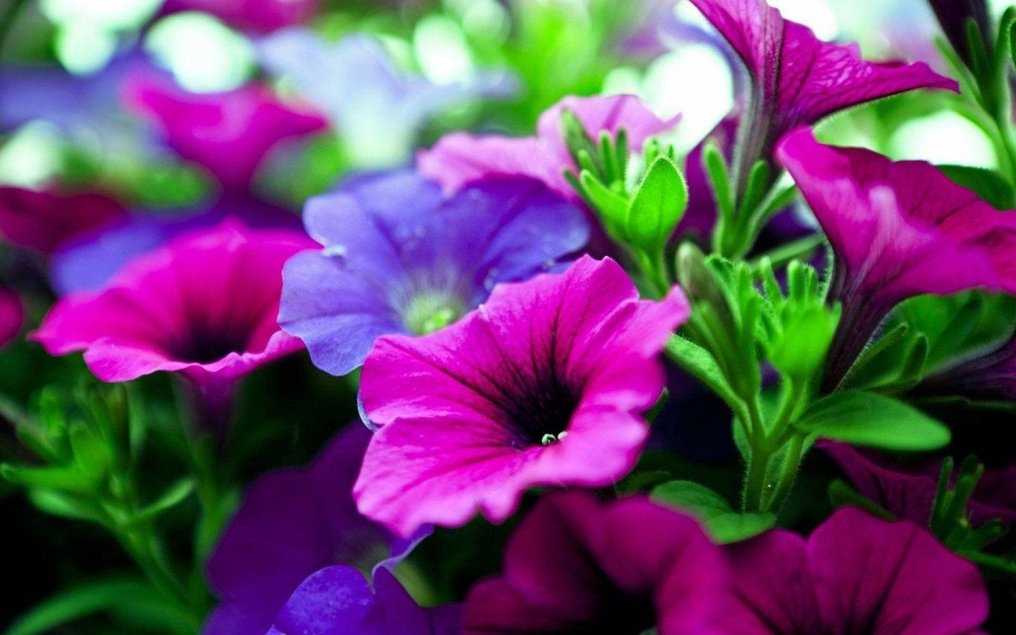 Flower Wallpaper HD For Desktop Free Download