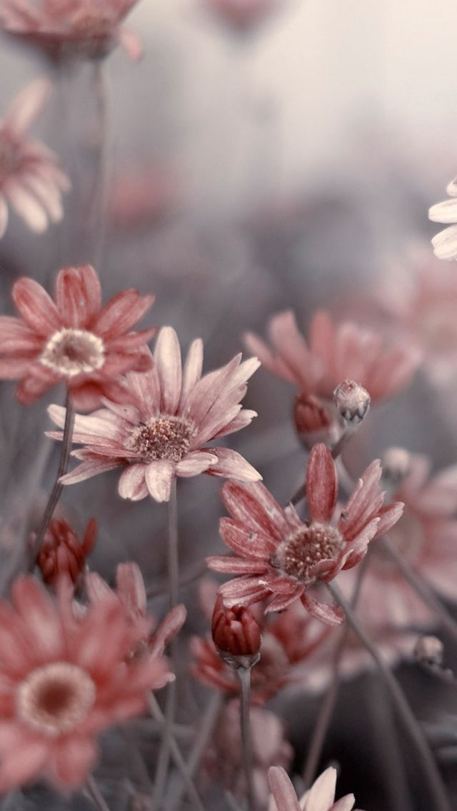 Flower Wallpaper Phone