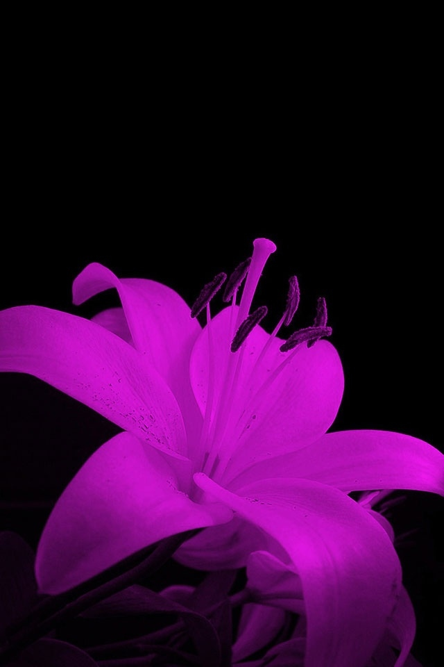 Flowers HD Wallpapers For Mobile