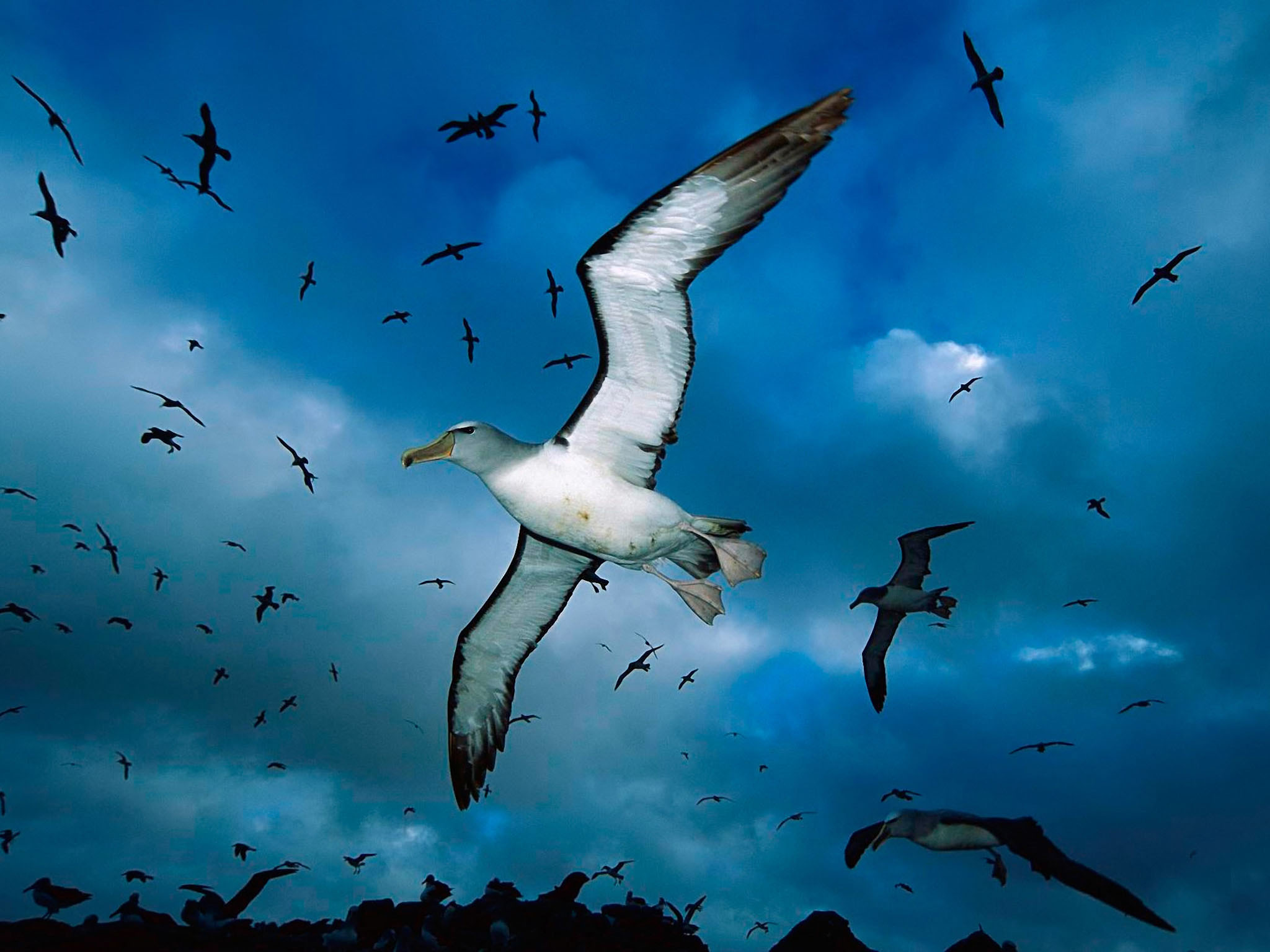 Flying Birds Wallpapers