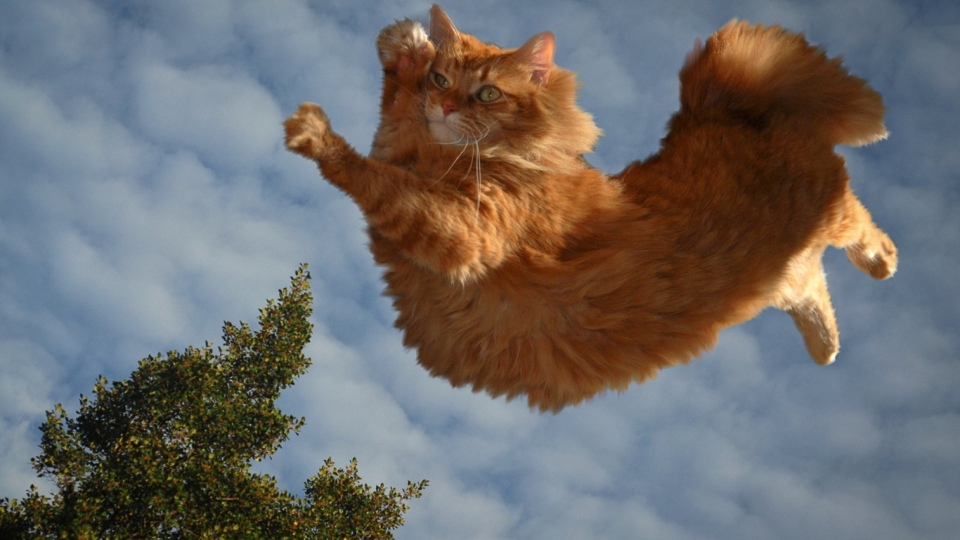 Best Cat Food Brands >> Download Flying Cat Wallpaper Gallery