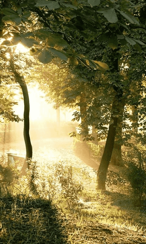 Forest HD Wallpaper Free Download