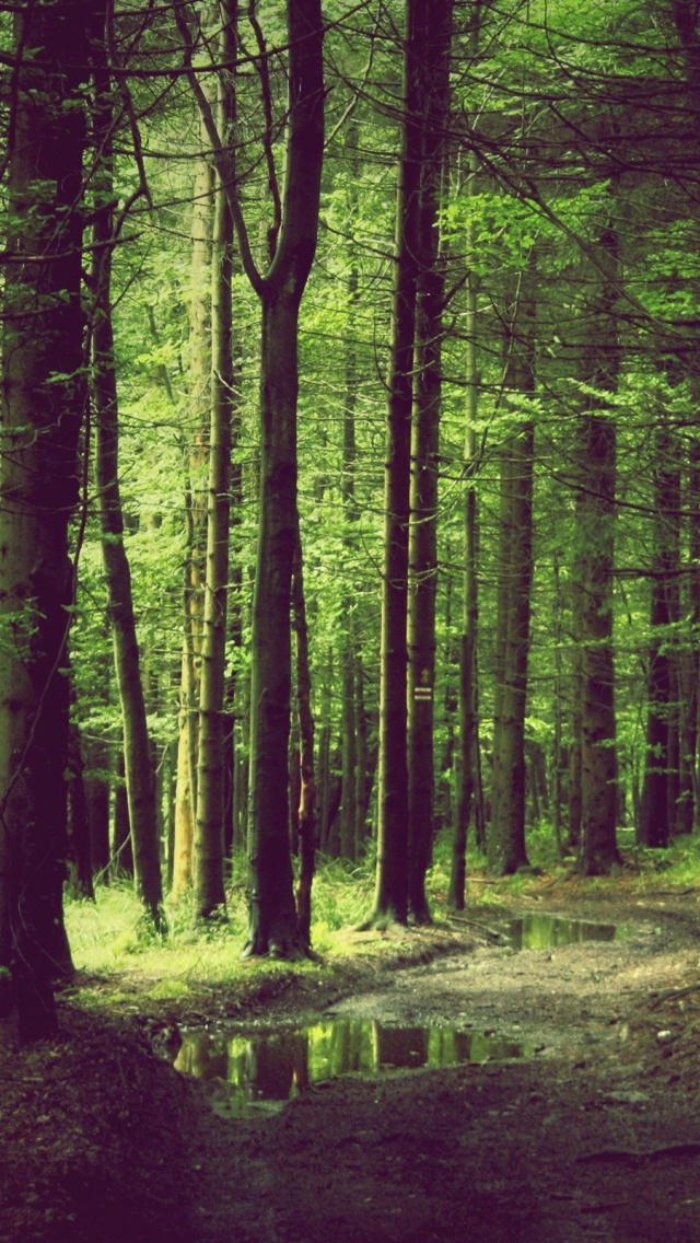 Forest Iphone Wallpaper