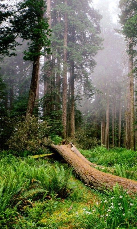 forest hd live wallpaper