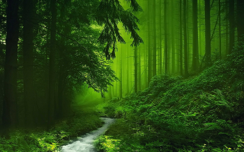 Forest Nature Wallpaper