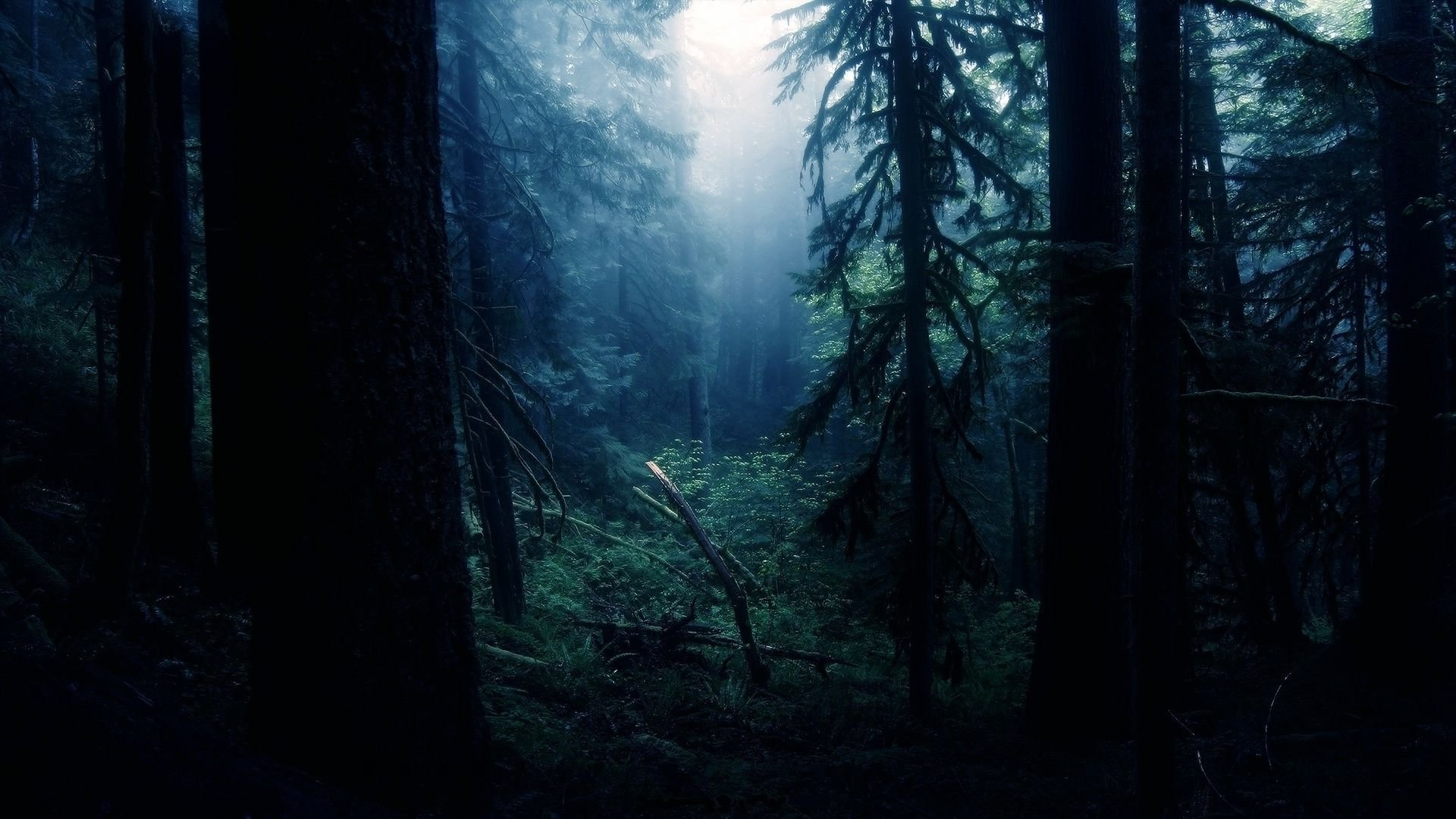 Download Forest Night Wallpaper Gallery