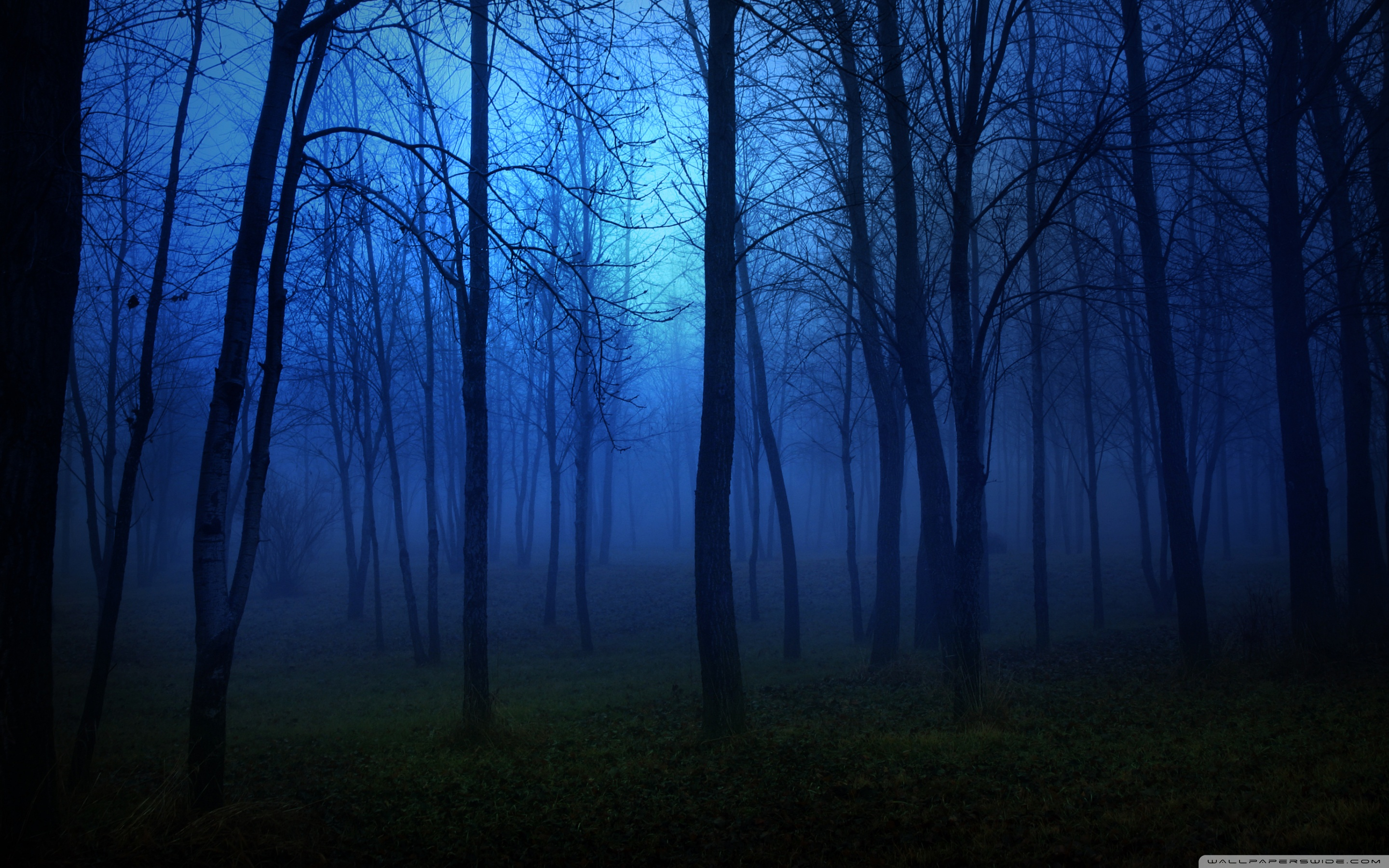 Forest Night Wallpaper
