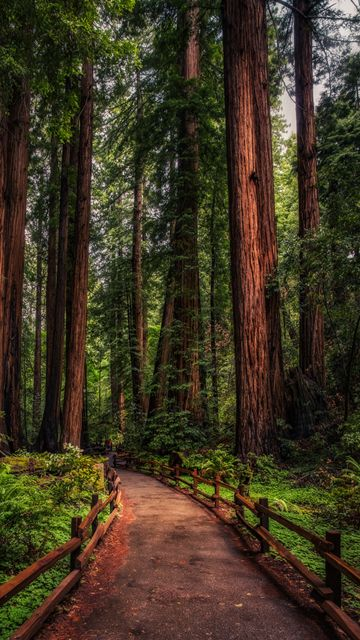Download Forest Phone Wallpaper Gallery