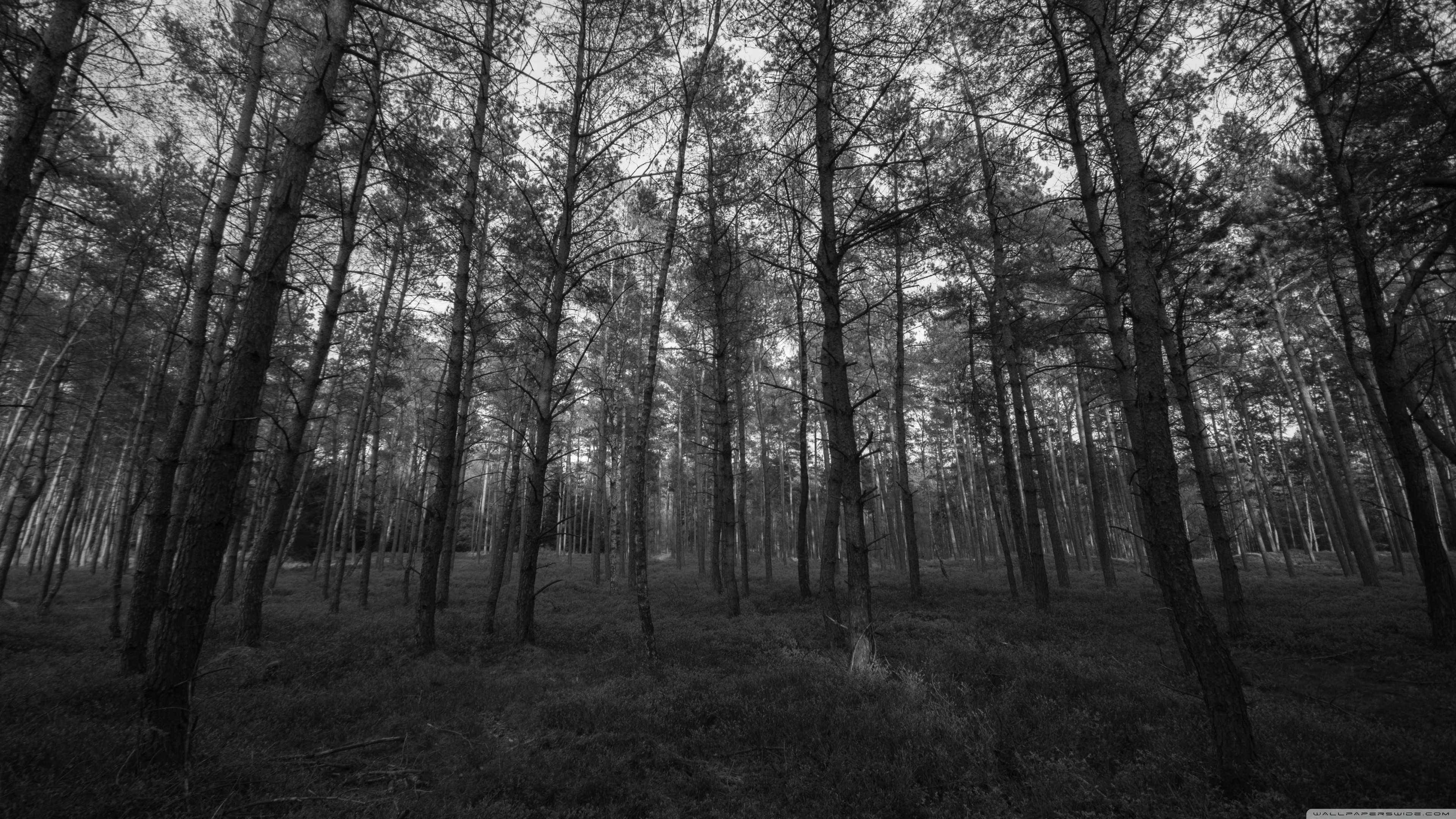 Forest Wallpaper Black And White