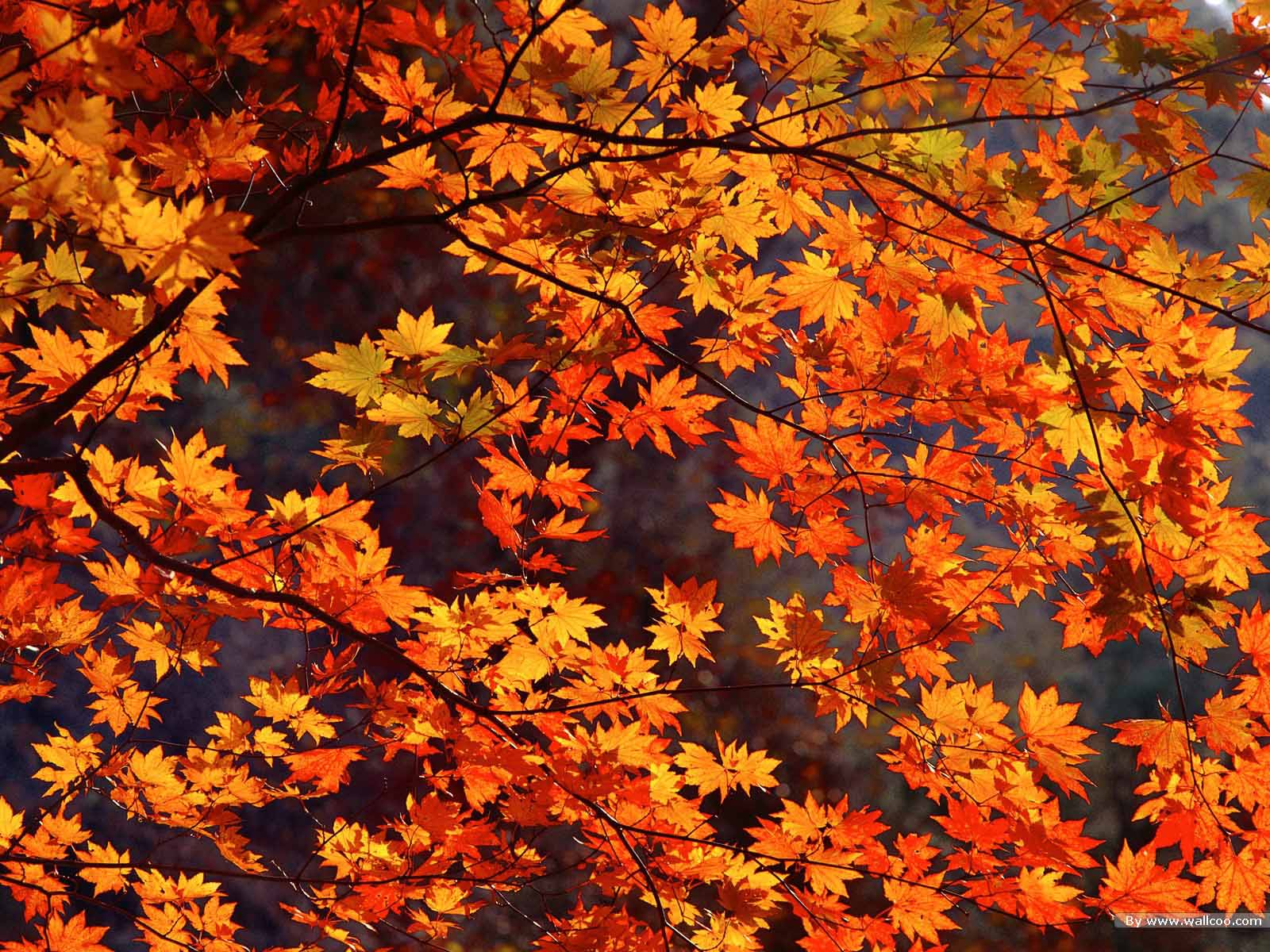 Download Free Autumn Wallpaper Gallery