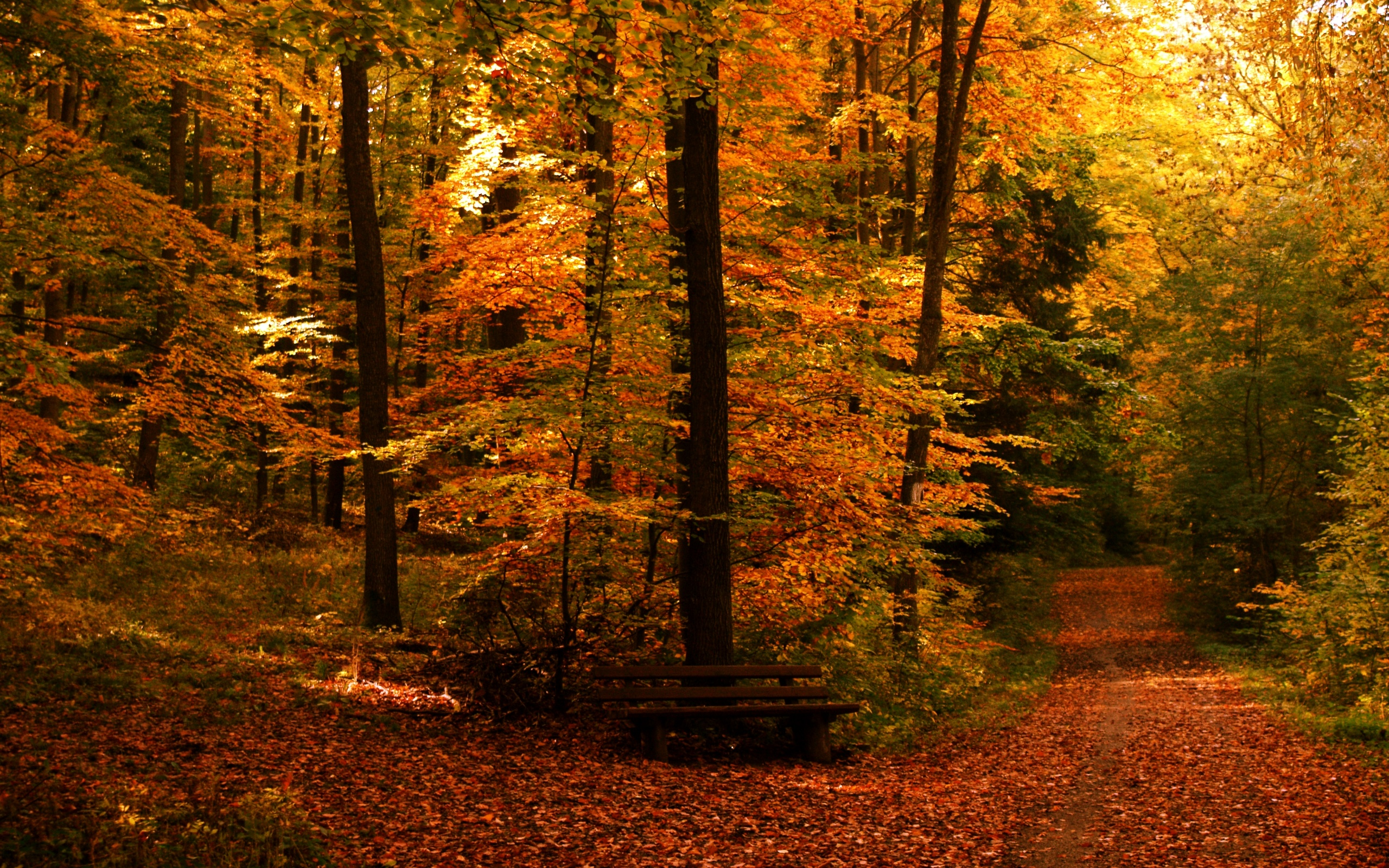 Free Autumn Wallpapers