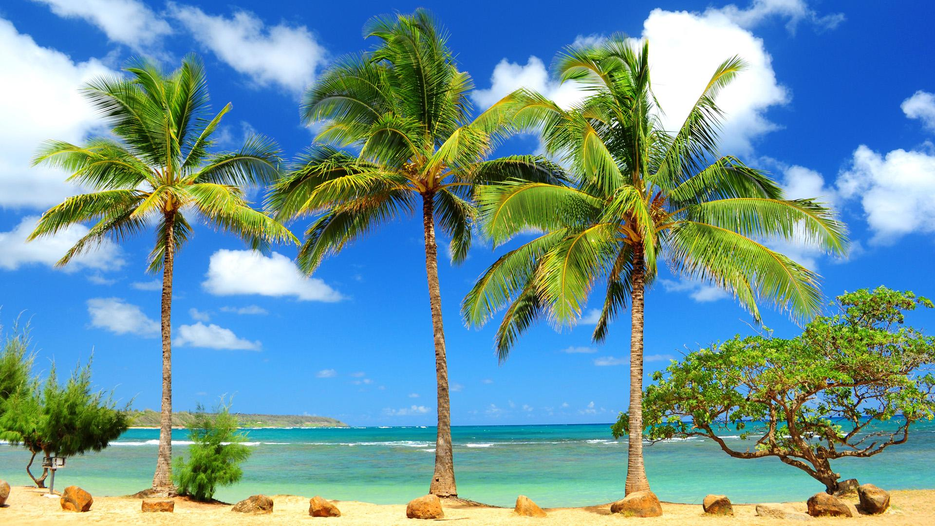 Free Caribbean Beach Wallpaper