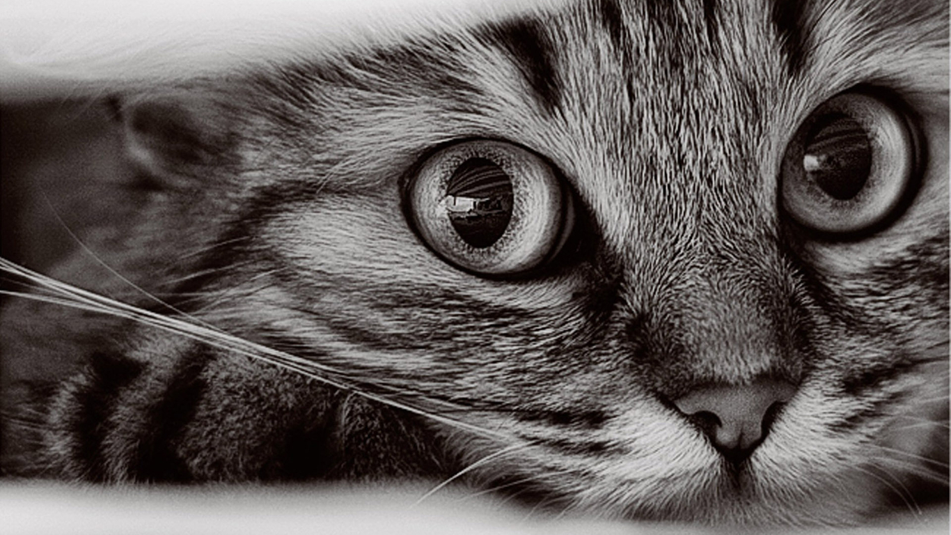 Free Cat Wallpaper