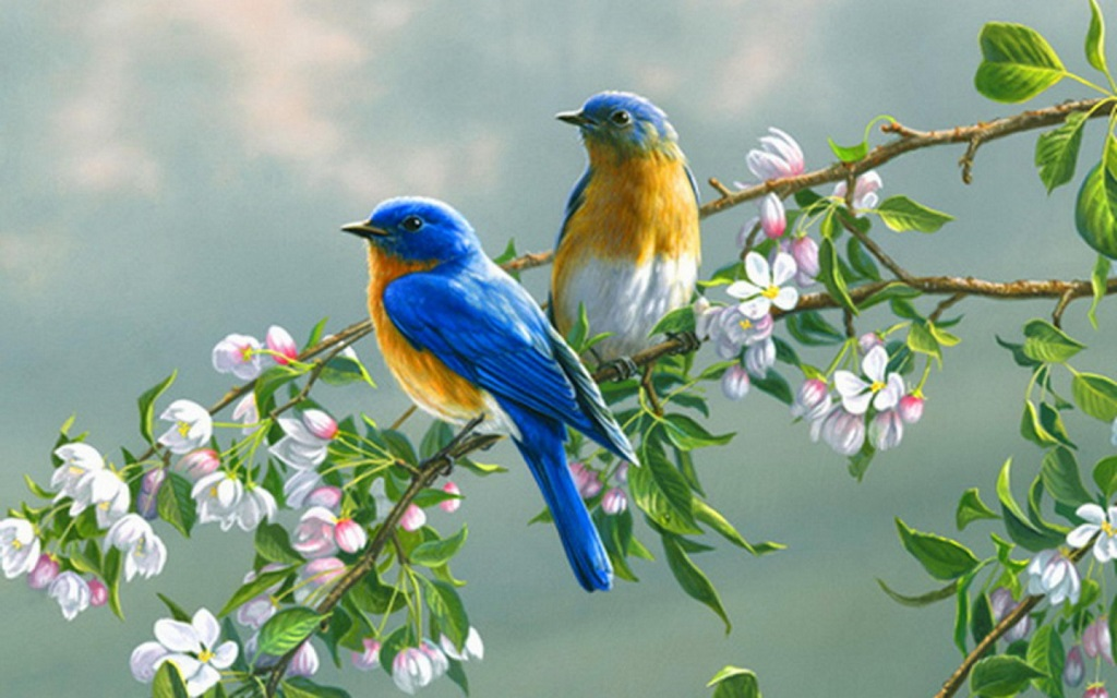 Free Download Birds Wallpaper