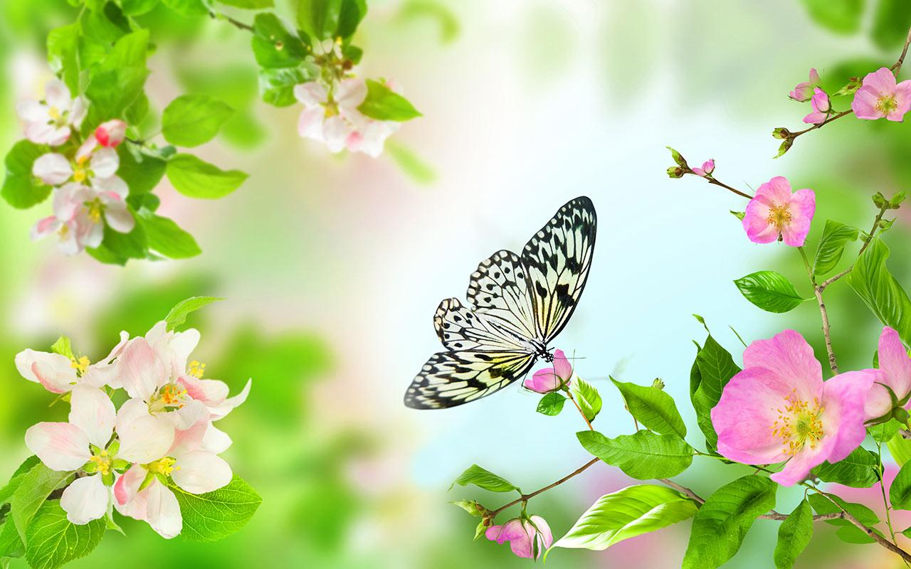 Free Download Flower Wallpaper For Pc