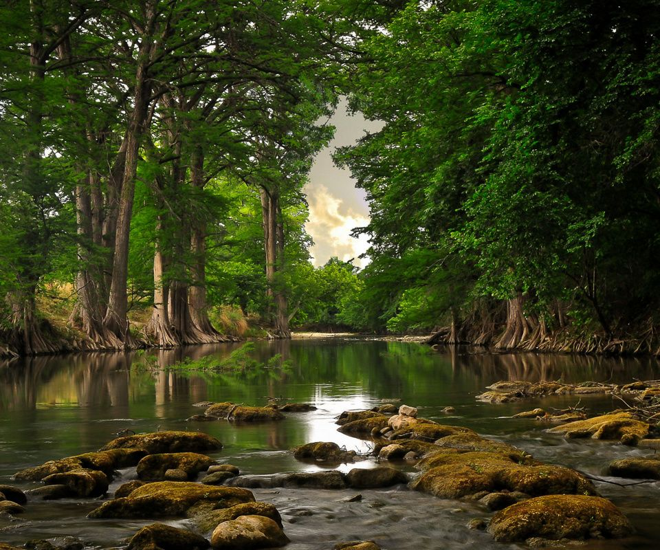 Free Download Nature Wallpaper For Mobile