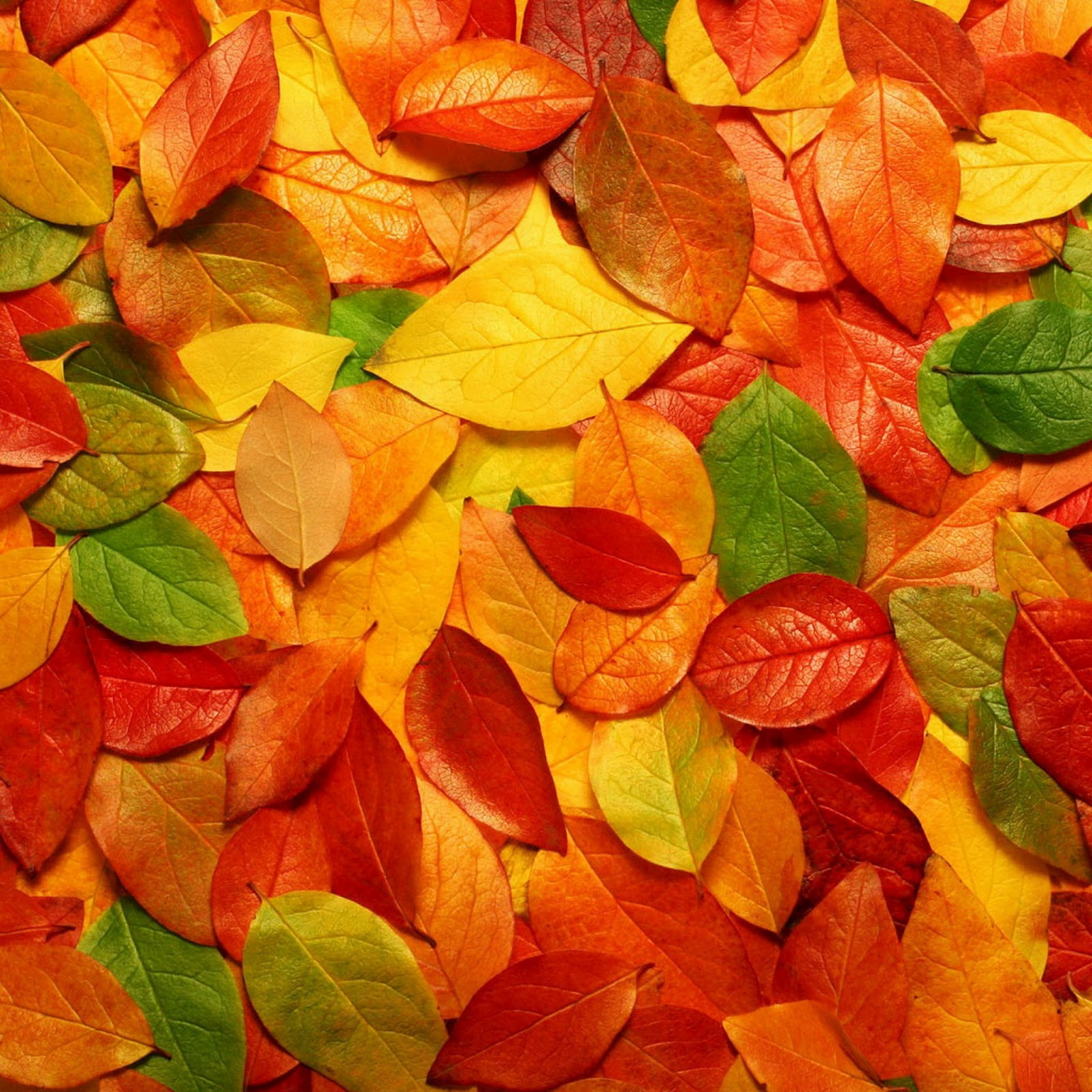 Free Fall Wallpapers For Android Fall Pics For Wallpaper