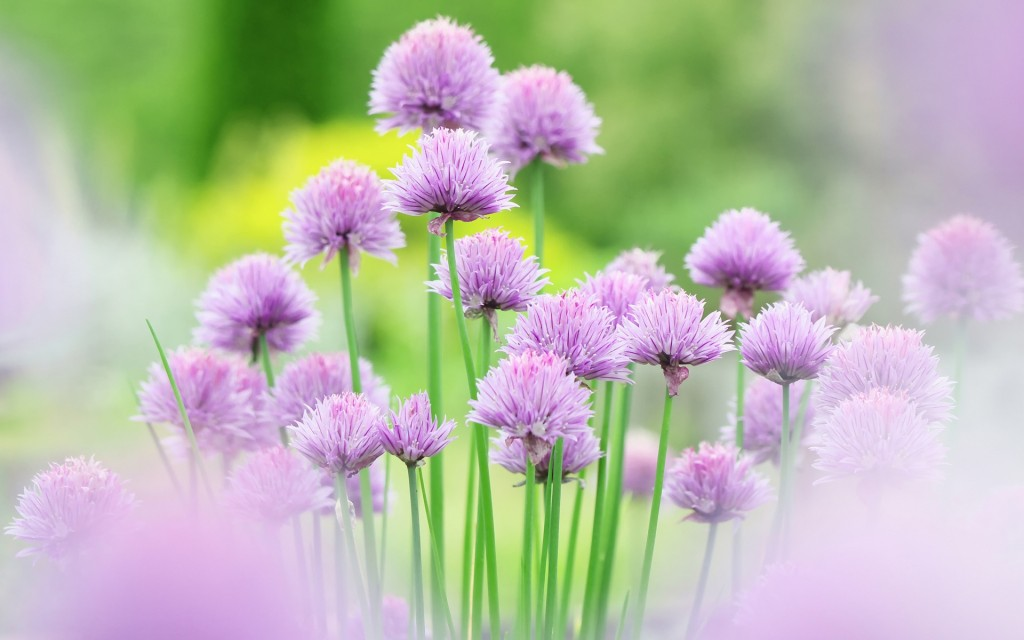 Free Flowers Wallpaper Images