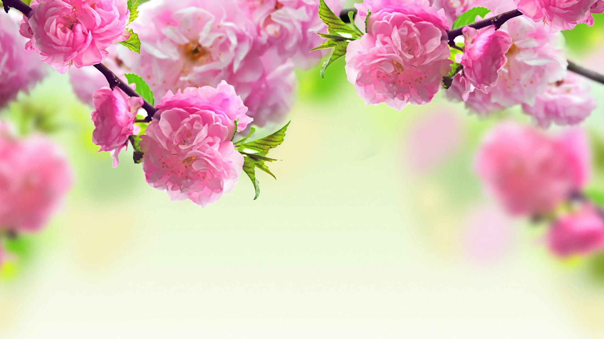 Free HD Spring Wallpaper