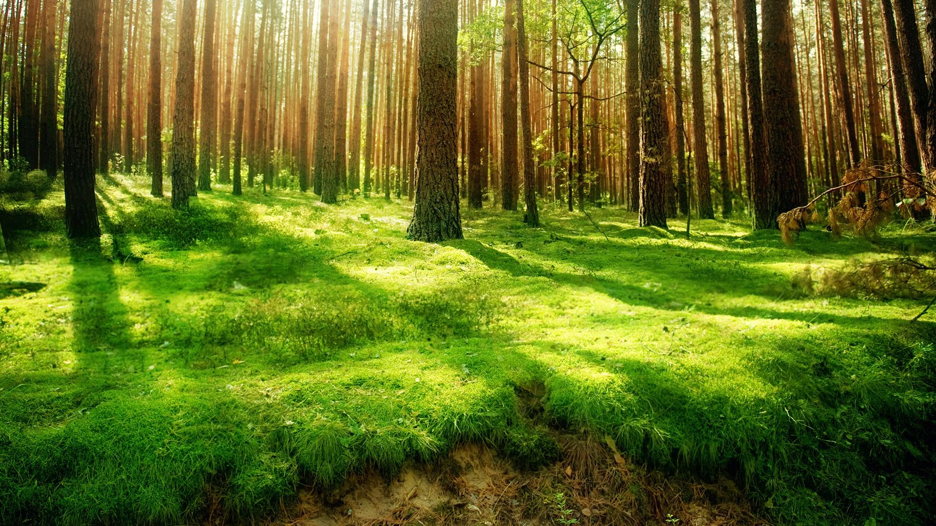 Free Wallpaper Forest