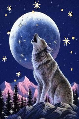 Download Free Wolf Live Wallpaper Gallery