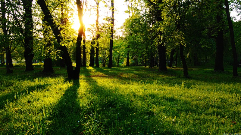 Full HD Wallpapers 1080p Nature Free Download