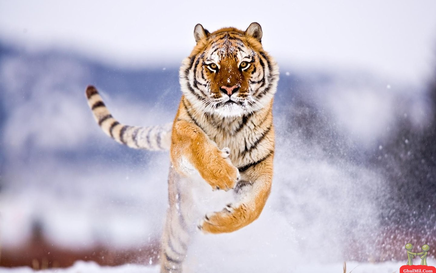 Full HD Wildlife Wallpapers