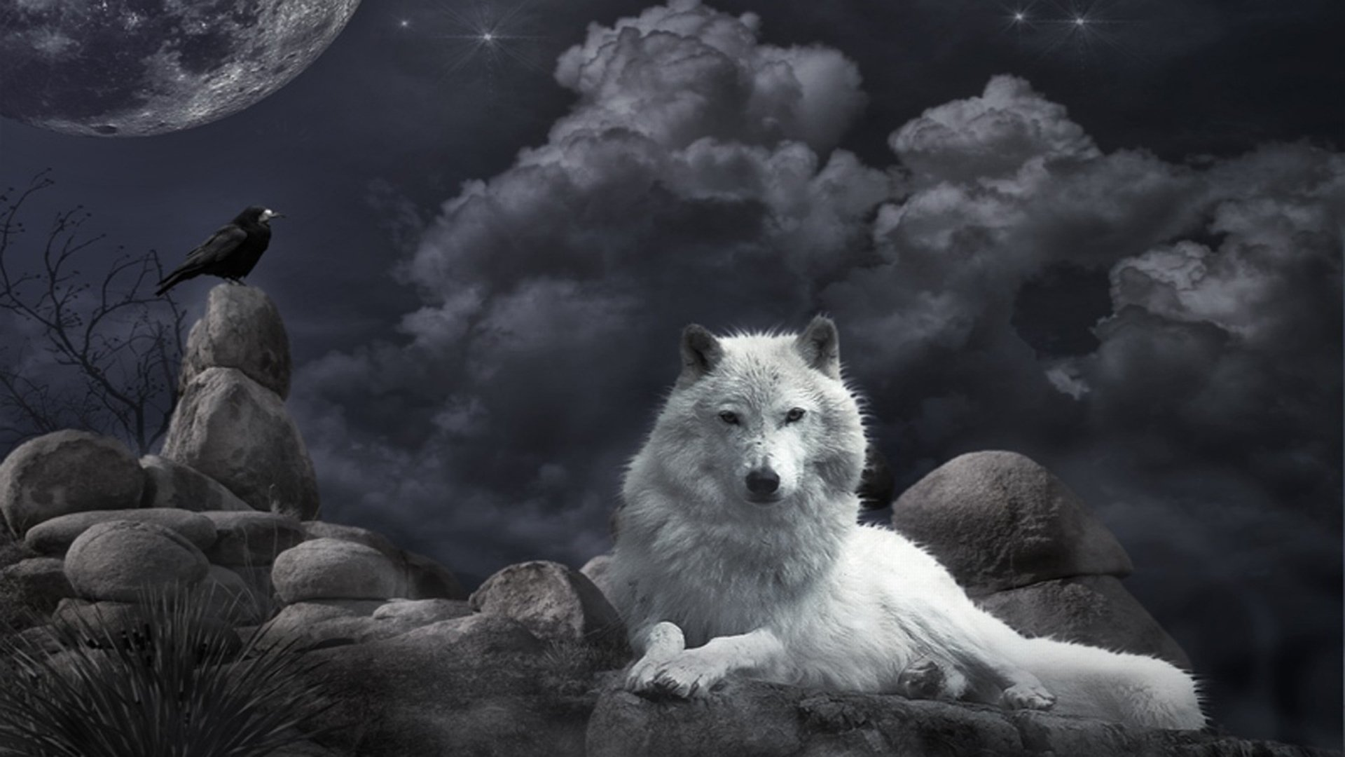Full HD Wolf Wallpapers