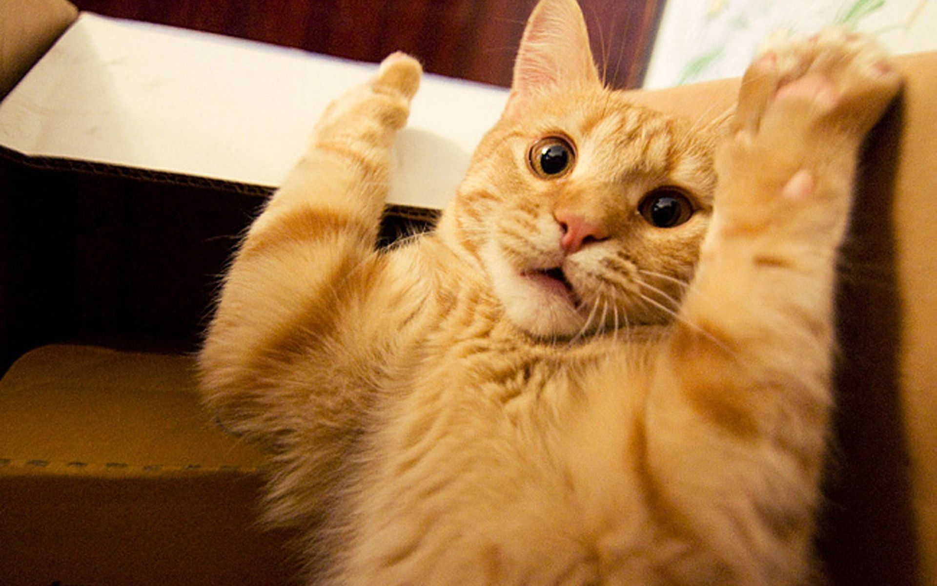 Funny Cats HD Wallpapers