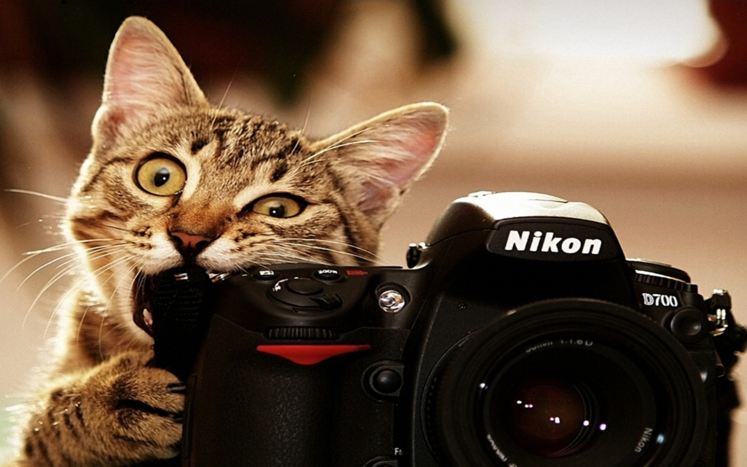 Funny HD Animal Wallpapers