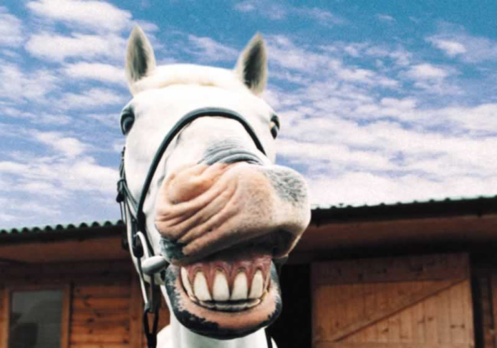 Funny Horse Wallpapers