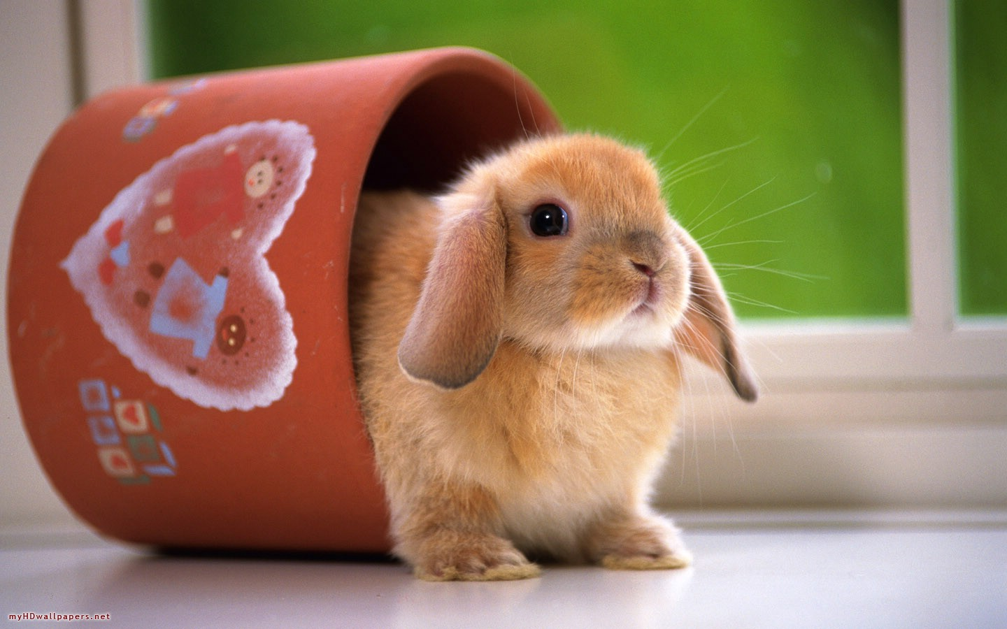 Funny Rabbit Wallpaper