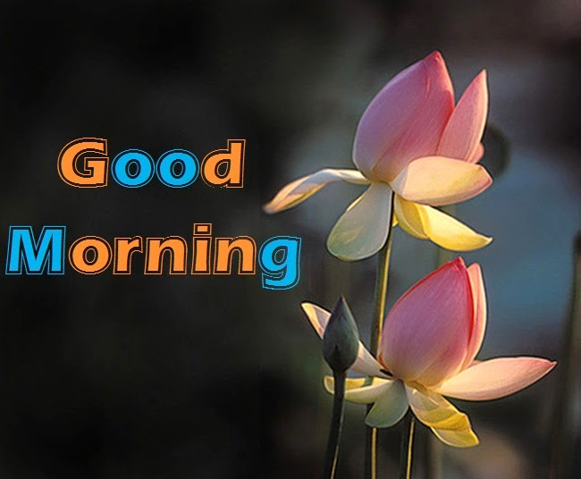 Good Morning And Good Night Wallpaper Free Download