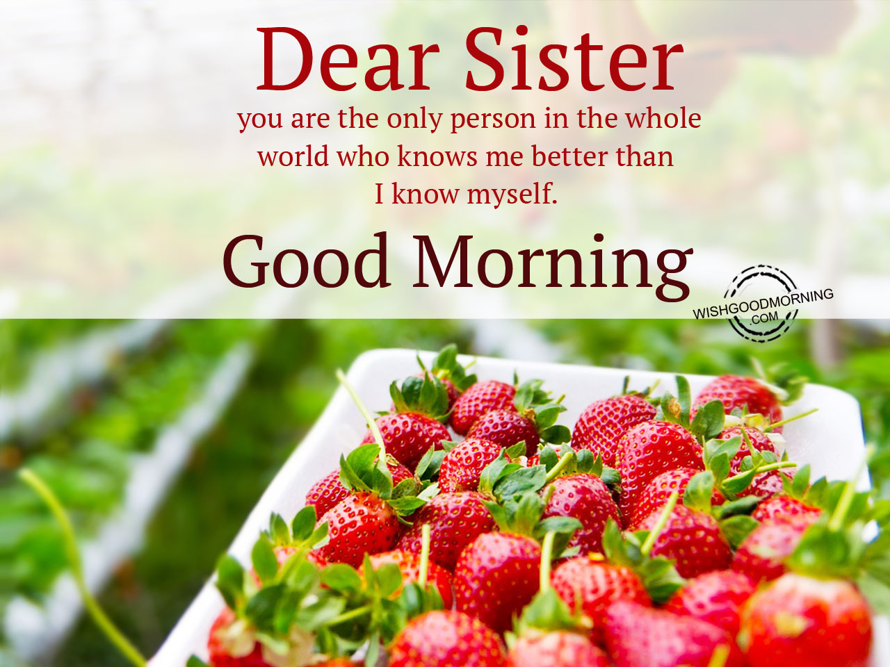 Download Good Morning Sister Wallpaper Gallery