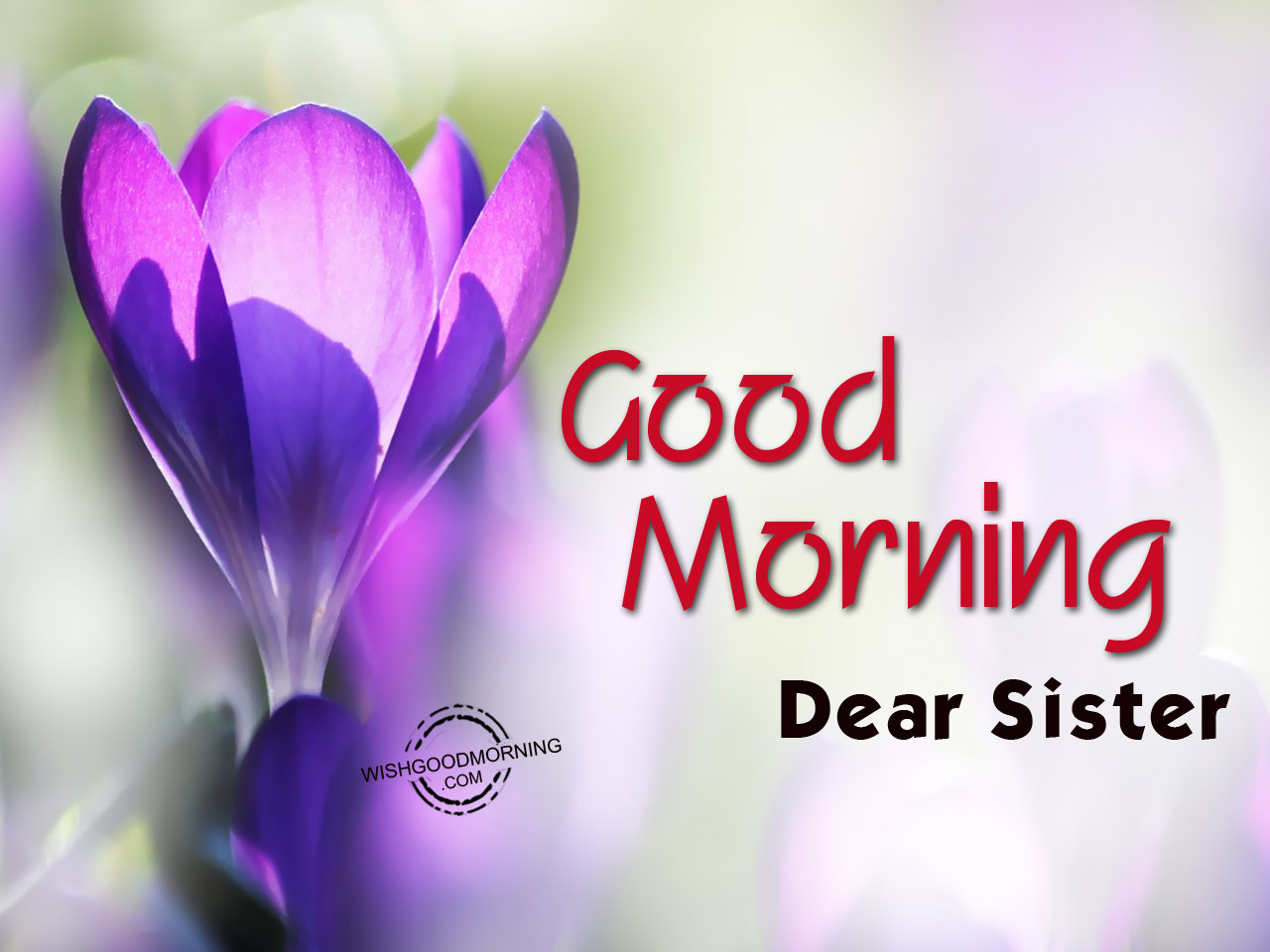 Good Morning Sister Wallpaper