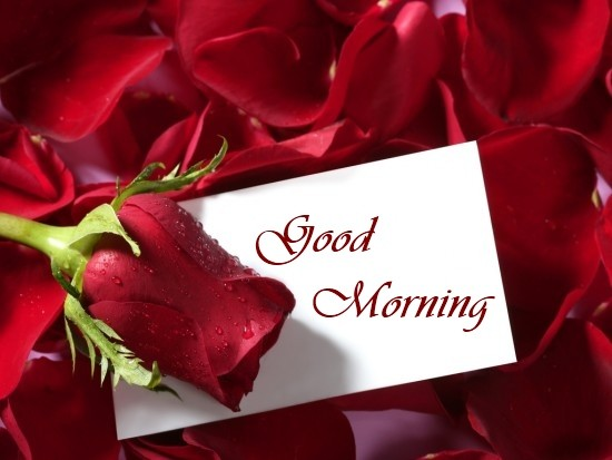 Good Morning With Rose Wallpaper