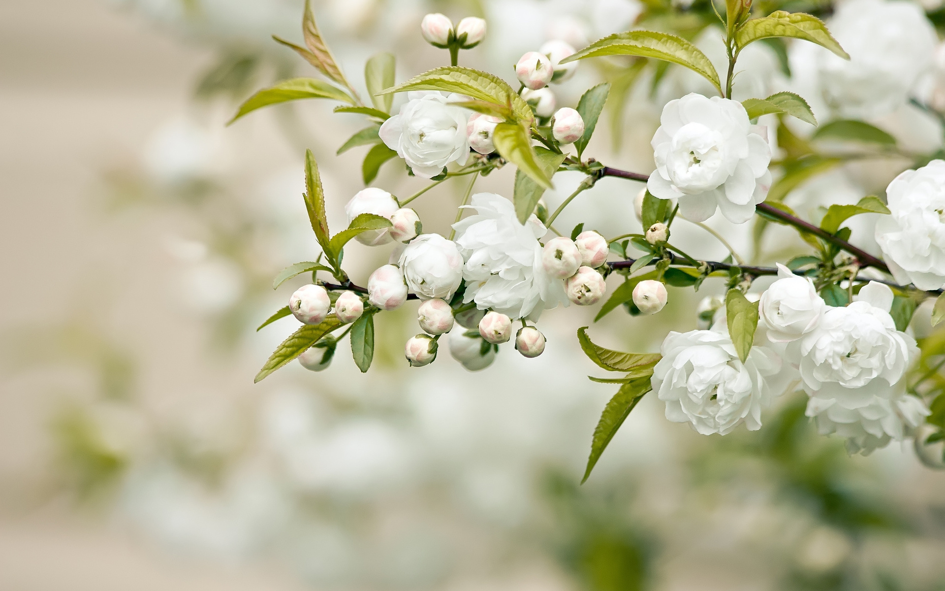 Outstanding white flower photo pattern wedding and flowers white flowers gallery choice image flower decoration ideas mightylinksfo