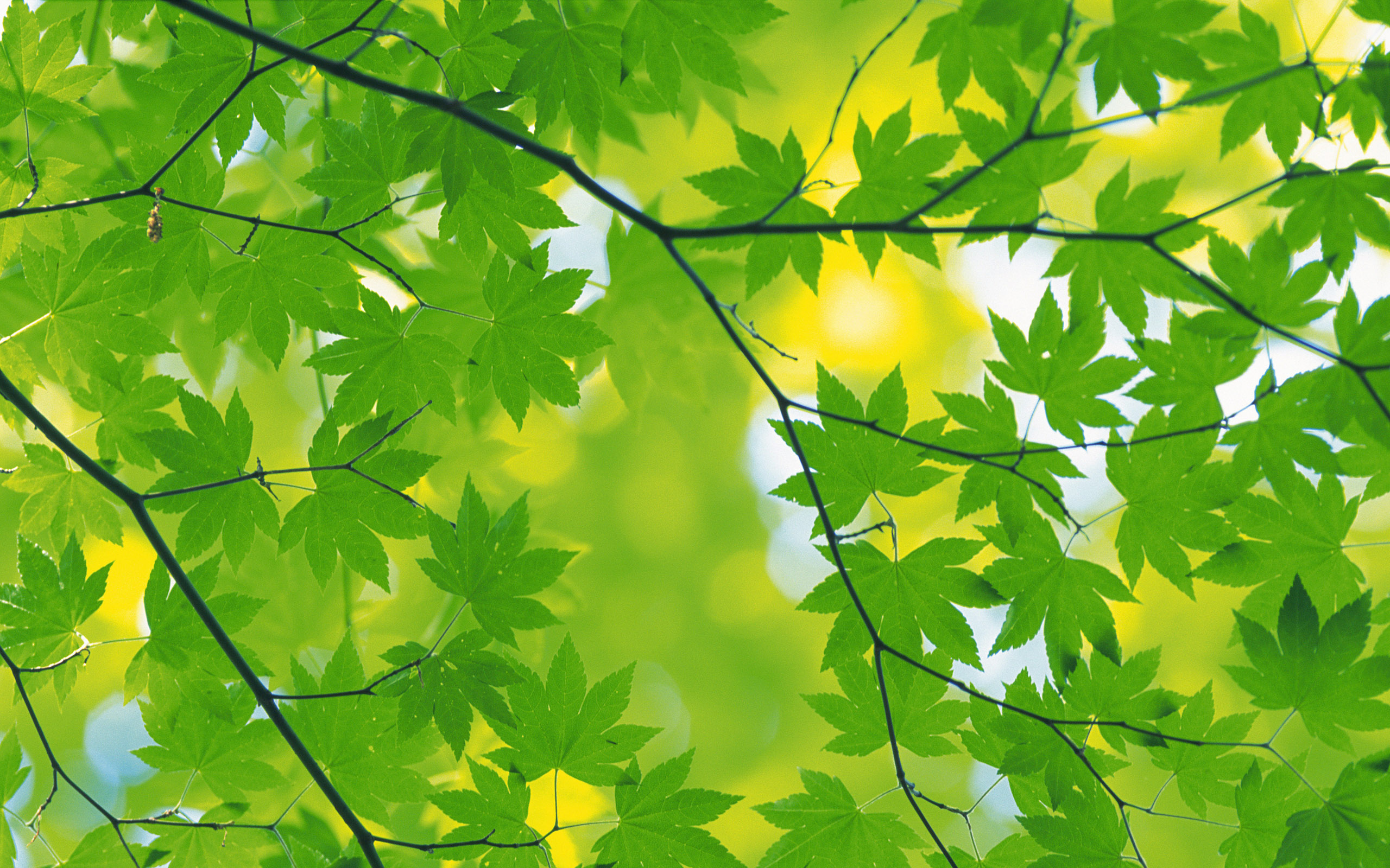 Green Foliage Wallpaper