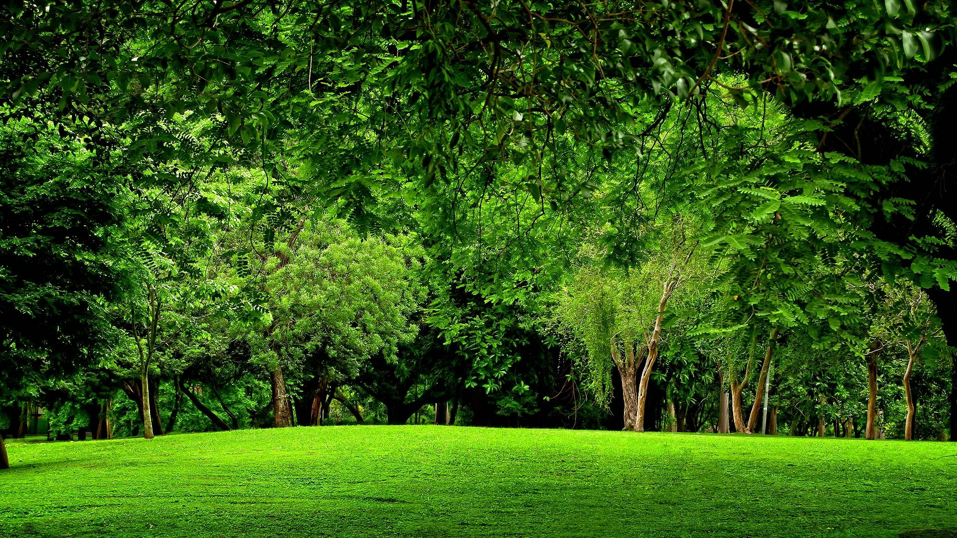Green Forest Images Wallpaper