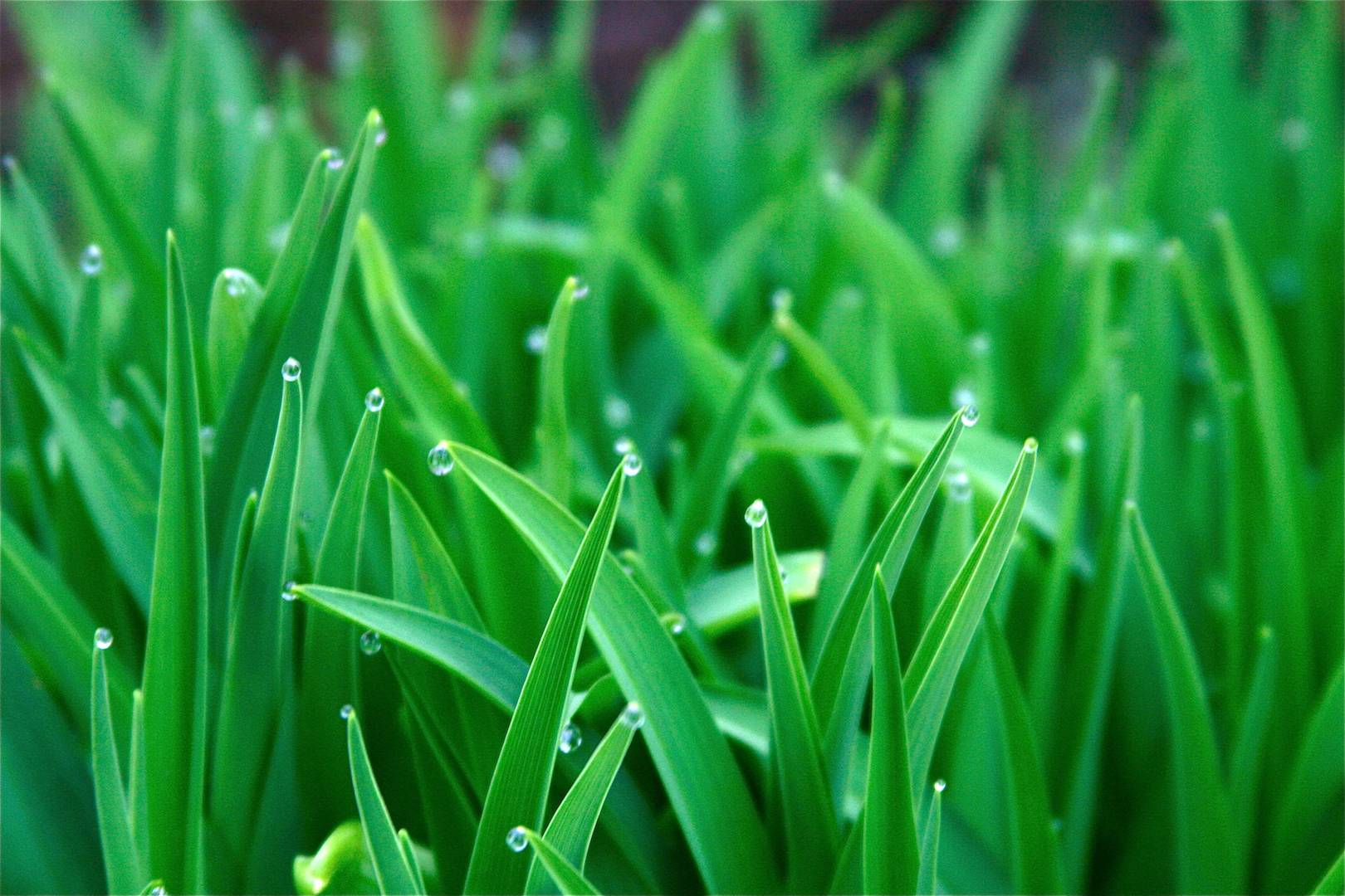 Green Grass HD Wallpaper