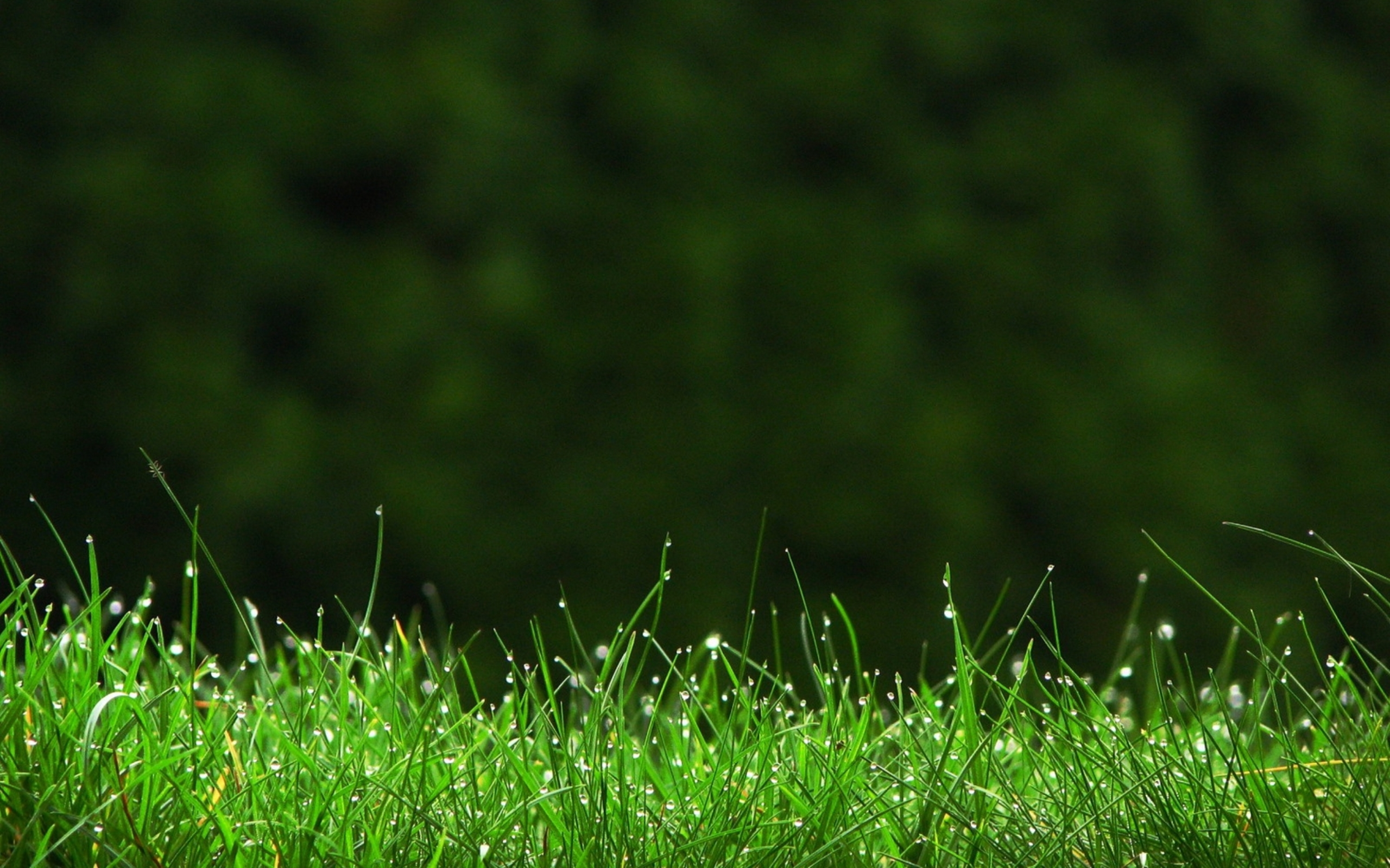 Green Grass Wallpaper HD
