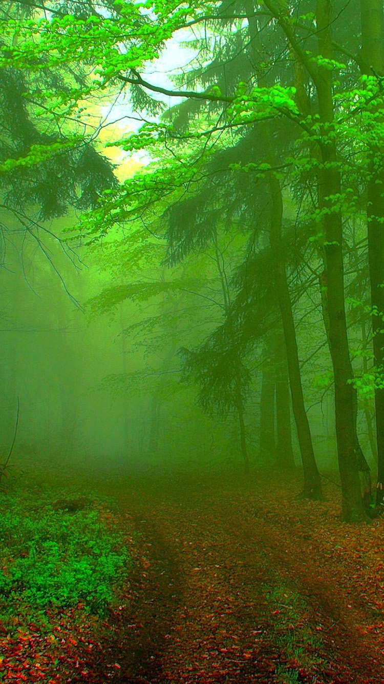 iphone green hd wallpapers forest phone screen polskie desktop
