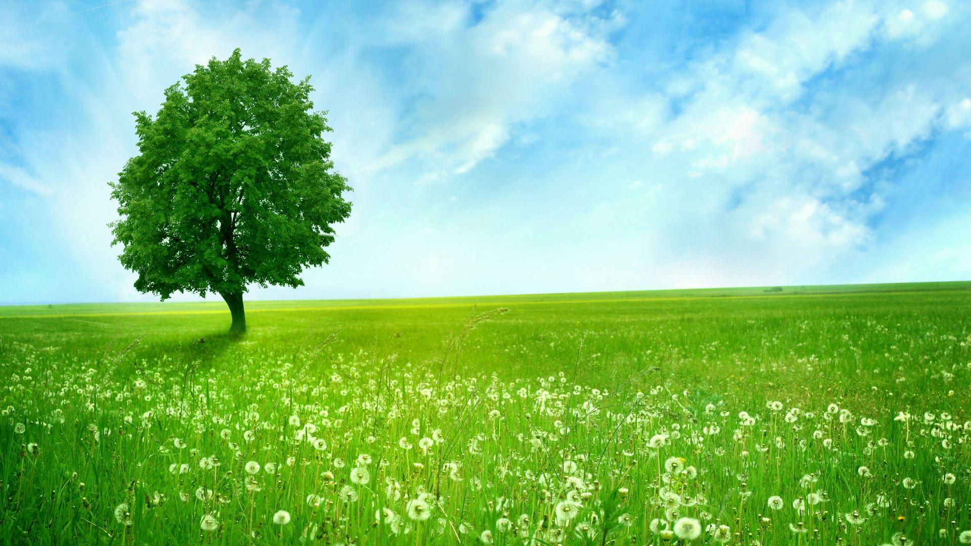 Green Nature Wallpaper Download