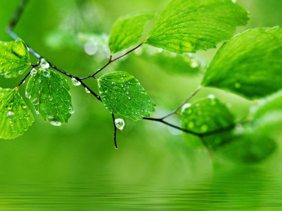 Green Wallpaper For Pc