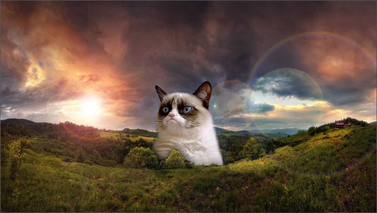 Grumpy Cat HD Wallpaper