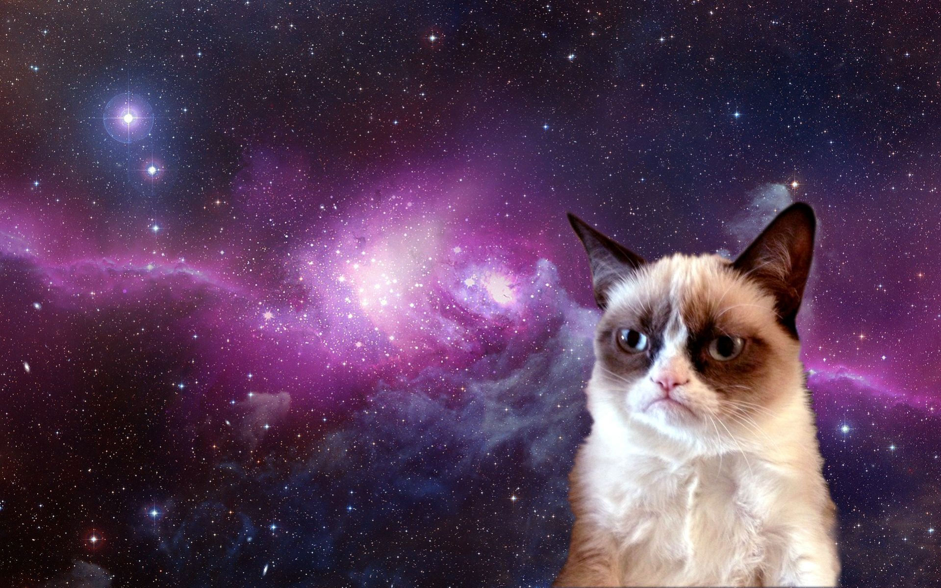 Grumpy Cat Wallpaper