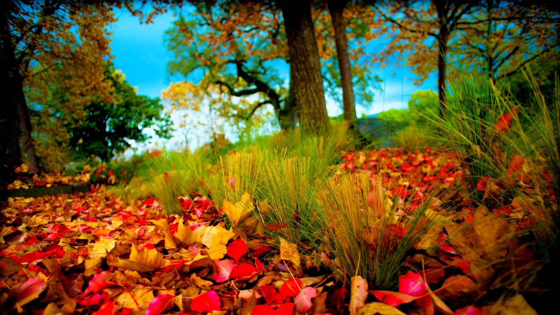 HD 3D Nature Wallpapers 1080p Widescreen