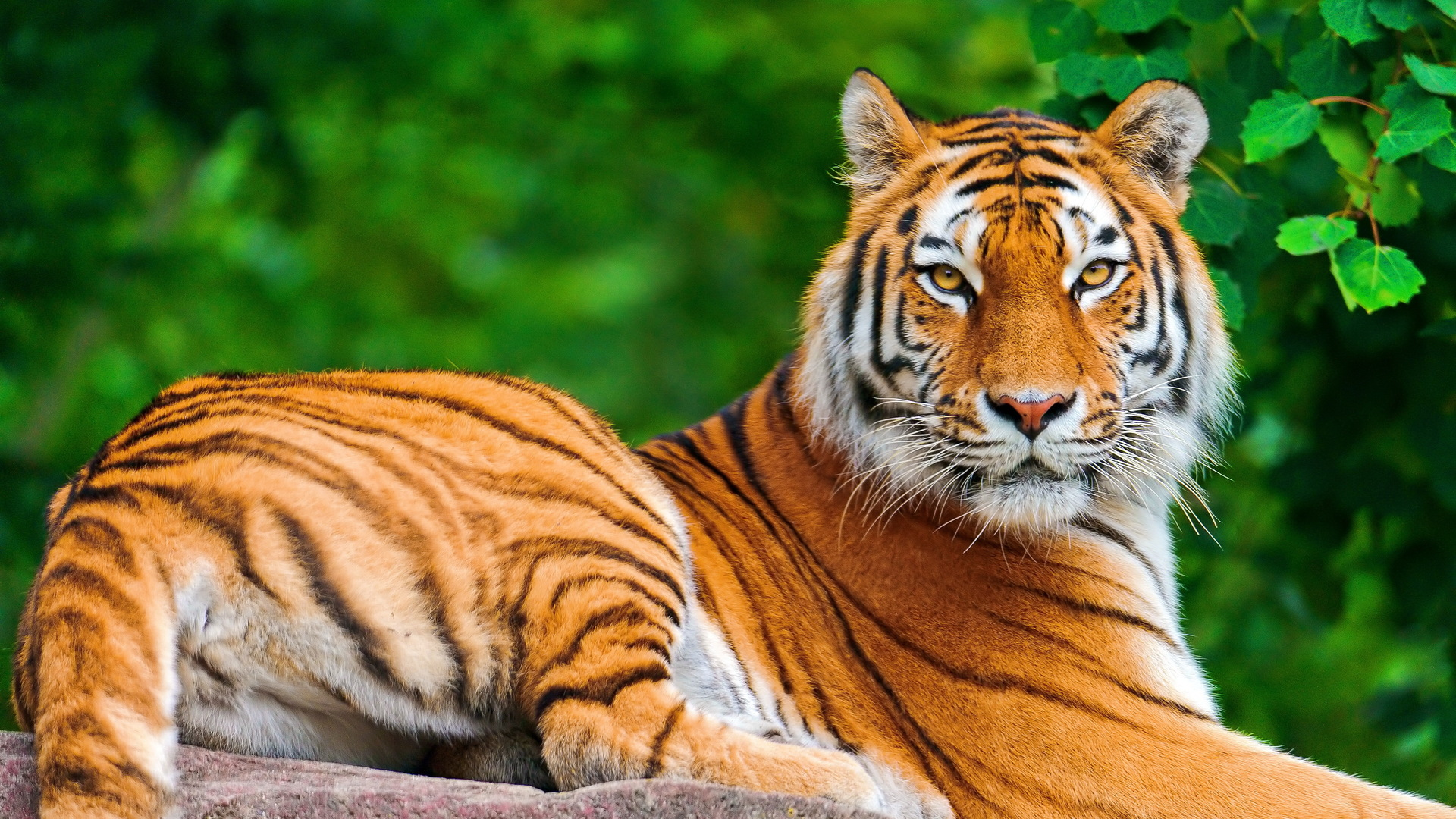 HD Animals Wallpapers