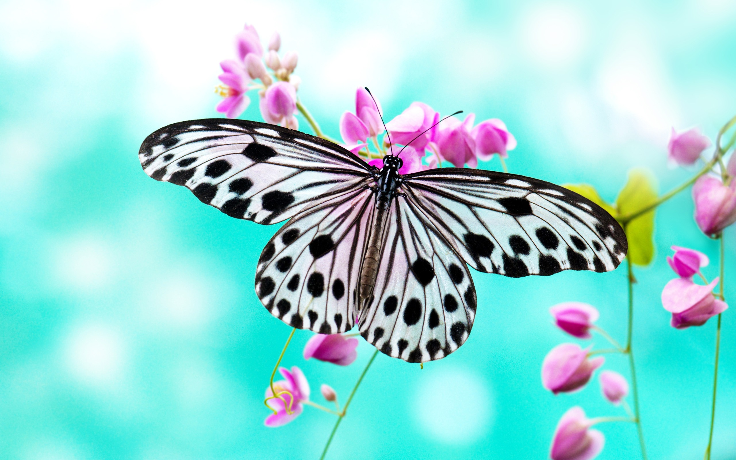 HD Butterfly Wallpaper