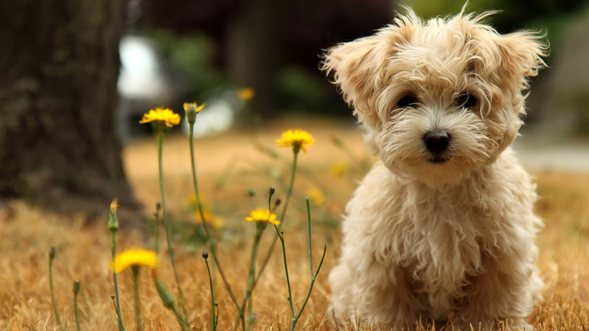 HD Dog Wallpapers For Desktop